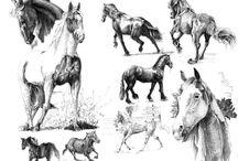 Sketch-animals