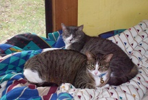Pets/Mycats / by David Gibbons