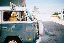 Dog Lover Finds / by Lisa Darley-Graham