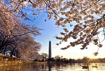 Must do and see in DC / Whether visiting DC for a short time or living in the area, these are the things to do.