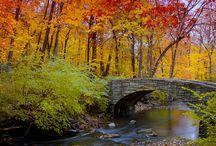 Fall / by Brenda Score | a farmgirls dabbles
