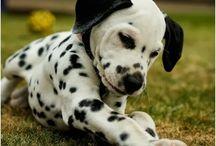 Cute Animal Pics :)