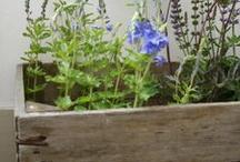 YardWork / Gardening