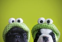 Dogs / by Paula Ordovás
