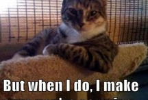 Cat Memes! / cat memes with various captions