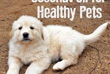 Coconutoil for pets