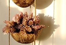DIY deco / Sea urchin. Shell. Other.