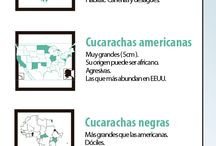 CUCARACHAS / Toda la información de las cucarachas: Tipos, remedios caseros para eliminarlas y demás curiosidades