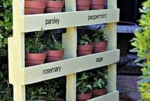 Gardening Plan