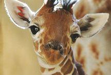 Sevimli Bebek Hayvanlar - GALERİ / Sevimli halleriyle içimizi ısıtan tavırlarıyla, yavru hayvanlara karşı ilgimiz hiç olmadığı kadar fazla.. Her biri birbirinde tatlı olan bu hayvanlar kendi karakteristik özelliklerini yansıtmakta. İnşallah beğeneceğiniz bir sevimli bebek hayvanlar galerisi olur :))  http://www.yolcumisali.com/2014/12/sevimli-bebek-hayvanlar-galeri.html