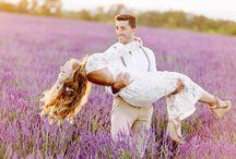 Lavender Fields / Lavender Fields