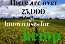Facts about Hemp / Did You Know? Hemp hides many interesting facts.