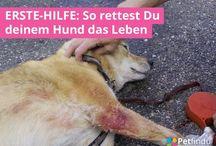 Hunde 1. Hilfe