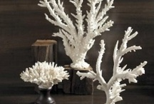 Coral finds & Displays