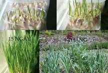 simple gardening and DIY for garden