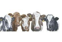 Gina Hawkshaw / Animal paintings by Wiltshire based artist Gina Hawkshaw