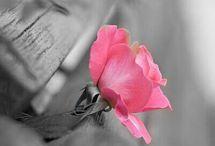 PHOTOS Tout en Gris avec une touche de Rose