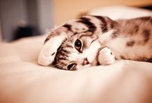 Cat Cat Cats / Here kitty kitty kitty... Here kitty.