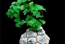 Σπάνια φυτά