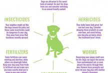 Pet Safety / Tips for keeping your pets safe