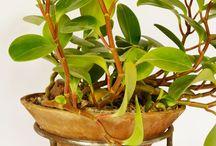 Planters by Glinka