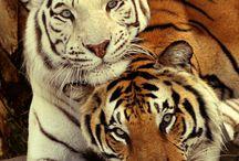 Tiere aus anderen Welten