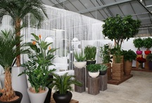 Our artificial plants and tree showroom / With the top quality artificial plants of Maxifleur you will be able to transform the atmosfere in your house, hotel or company instantly! Visit our spectacular 1000m² showroom to get inspiration from the best artificial plants, replica trees and artifical palm trees.
