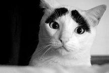 Kitty Cats / Kitty-Cats, felines, pussycats, tigers, lions, cheetah, etc / by Spilltojill