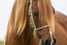 ❤️arabian horses