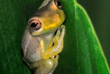 Fabulous Frogs! / by Trish Mastriano
