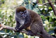 """Madagascar / Madagascar is home to thousands of animal species, such as lemurs, found nowhere else, plus rainforests, beaches and reefs. It is home to as well as the """"Avenue of the Baobabs,"""" a road lined by massive centuries-old trees."""