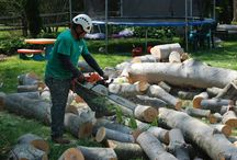 Willow Tree & Landscaping Services In Montgomery County / Willow Tree & Landscaping Services experienced and knowledgeable ISA Certified Arborists would be happy to provide professional evaluations.