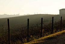 Landscape / Unesco Langhe Roero Monferrato Landscape