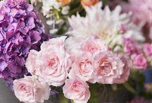 Color floral arrangement / by Bonnie Thompson