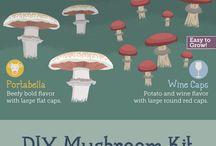 Mushrooms & Other Fungi ;)