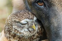 hayvan dostlugu