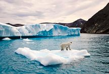 Polar Bears and Glaciers of Baffin Island / Last minute availability for an outstanding safari to the east coast of Baffin Island in the Canadian Arctic. Polar bears in summer. The iceberg capital of the Canadian Arctic. The rate bowhead whale, the longest lived mammal on the planet.