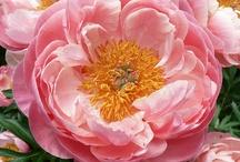 Floral Monogram Color Inspiration Board
