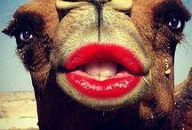 Lip care