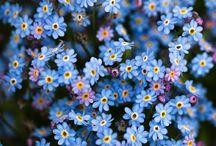Flowers / by Lindsay O'Morrow