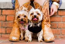 I LOVE Yorkies! / by Karen Dionis
