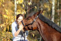 Pferde Daily