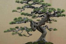 Bonsai / Ideas of small landscapes