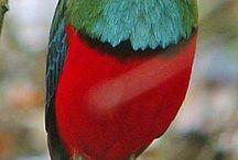 Beautiful Birds in Paradise