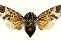 cicada / by Jane Wynn