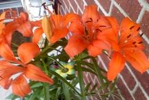 MY FLOWERS / by Cynthia Green