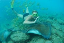 Water sports / If you are into water sports then you will love the snorkeling experience from Curacao.
