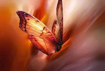 il tocco delle farfalle
