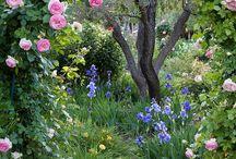no meu futuro jardim