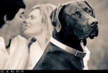 Engagement Photo Ideas / by Harley Mathews